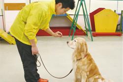 「YIC京都ペット総合専門学校」での実習授業